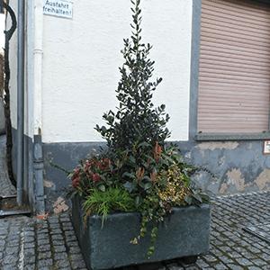 winterbepflanzung