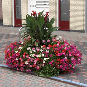 Blumenkästen Typ Voorburg